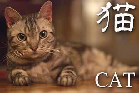 猫 まん丸オメメ